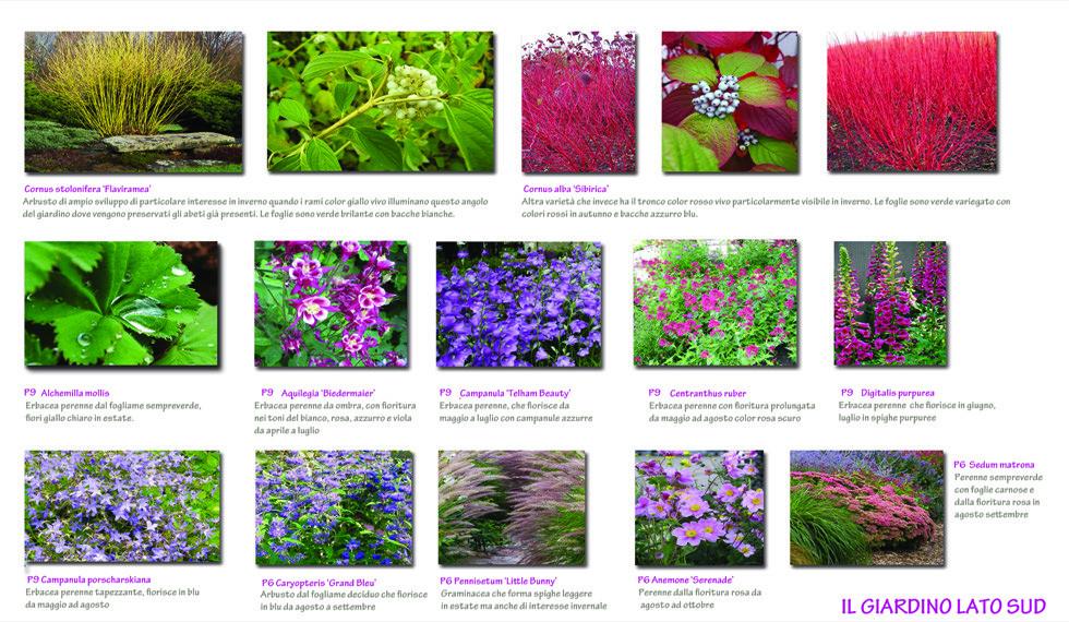 Scelte botaniche_7