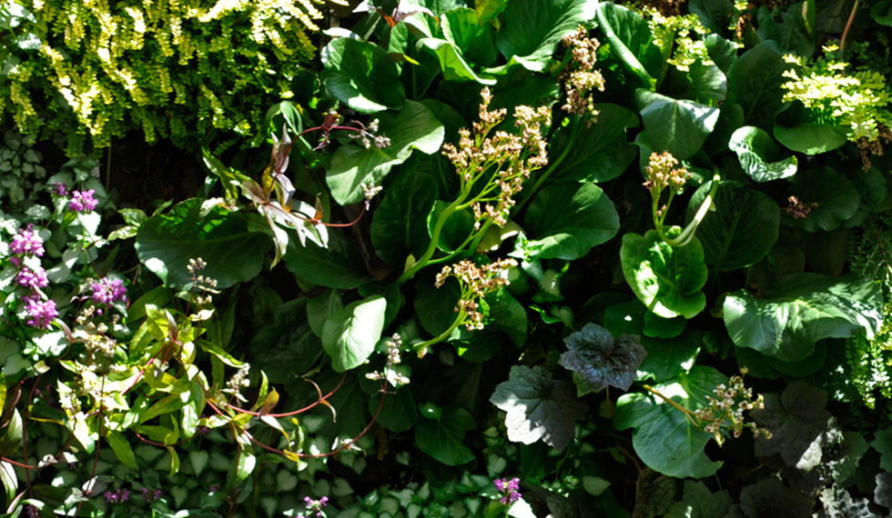 Aapaesaggi giardino segreto - Nascondere griglia giardino ...